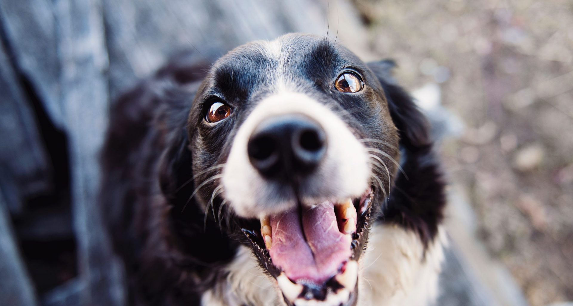 animal-blur-canine-close-up-551628