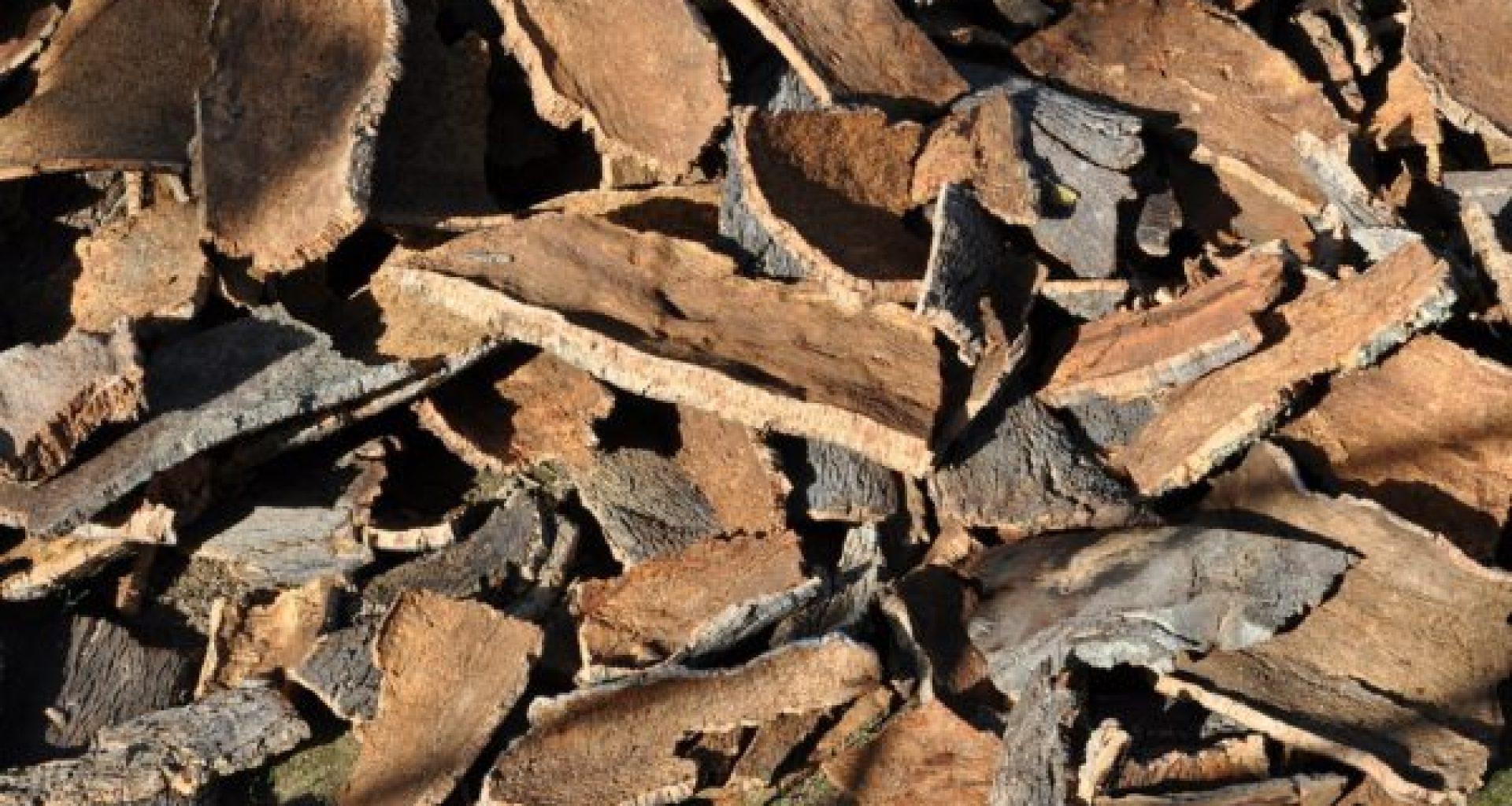 cork-oak-505263_1280