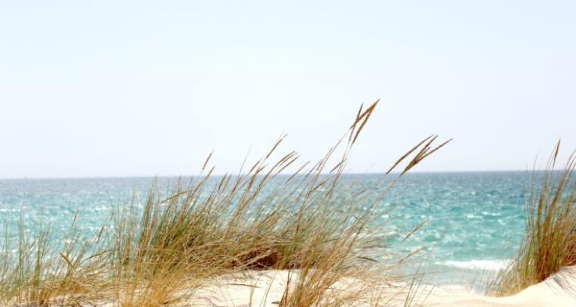 grass-beside-the-sea-662994